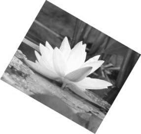 Рис. 4.6. Картинка, получившаяся в результате поворота исходного файла flower.jpg на 30 градусов по часовой стрелке